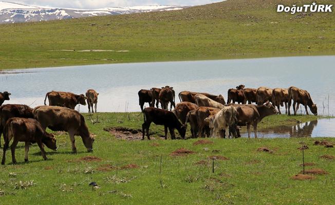 İspir'de gölet inşaatı tamamlandı