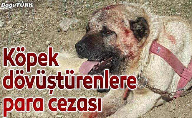 Köpek dövüştürenlere para cezası