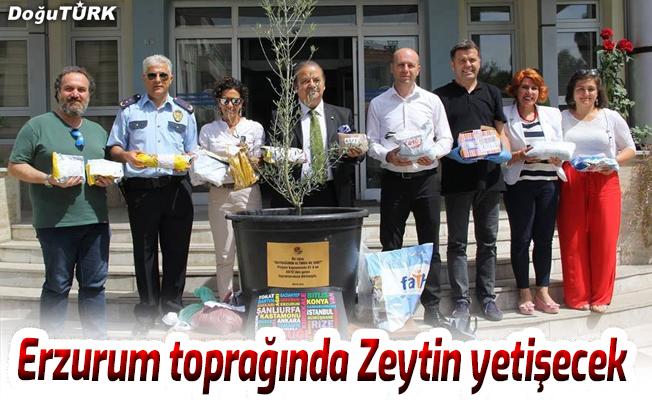 Erzurum toprağında Zeytin yetişecek