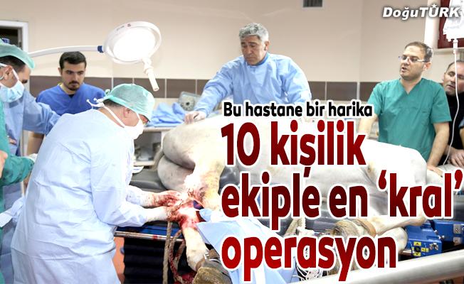 'Kral'a 10 kişilik ekip ile çok 'kral' operasyon