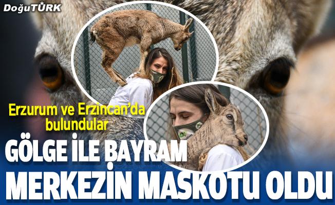 """Dağ keçileri """"Gölge"""" ve """"Bayram"""" yaban hayatı merkezinin maskotu oldu"""