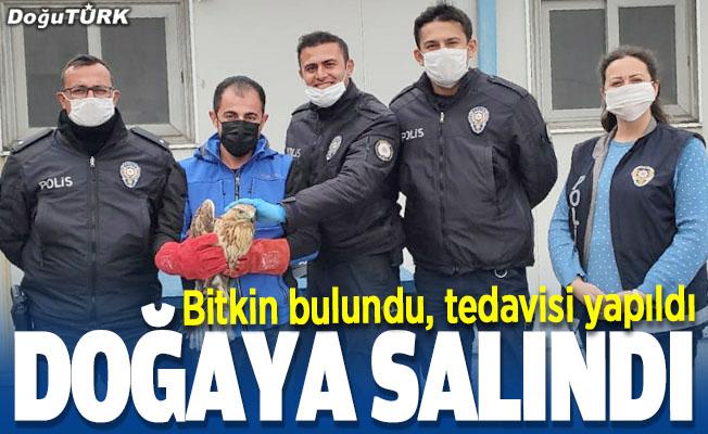 Erzurum'da bulundu, doğaya salındı