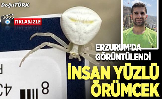 """Erzurum'da görüntülenen """"insan yüzlü örümcek"""" şaşırttı"""