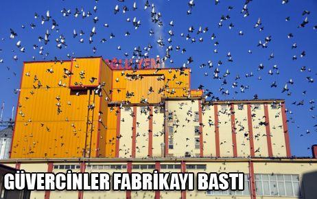 GÜVERCİNLERİN FABRİKA BASKINI