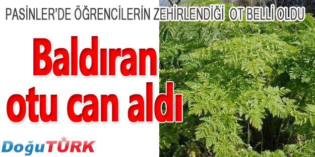 PASİNLER'DE BALDIRAN OTU CAN ALDI