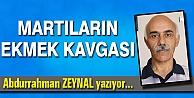 MARTILARIN EKMEK KAVGASI