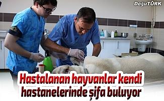 Hastalanan hayvanlar kendi hastanelerinde şifa buluyor