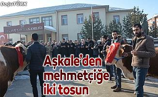 Aşkale'den Afrin'deki Mehmetçiğe 2 tosun
