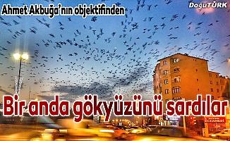 Erzurum'da gökyüzünü kargalar kapladı