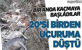 Erzurum'da uçuruma düşen inekler telef oldu