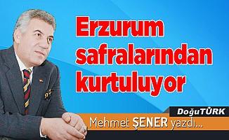 Erzurum safralarından kurtuluyor