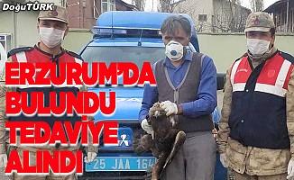 Erzurum'da bulundu, tedaviye alındı