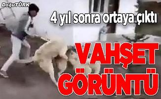 Erzurum'da köpeğe eziyete işlem