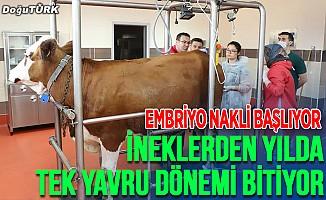 """Atatürk Üniversitesi """"ineklerde embriyo nakli""""ne başladı"""
