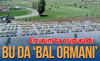 """Erzurum'da """"bal ormanı"""" oluşturuldu"""