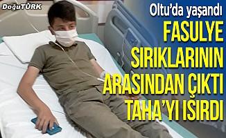 Yılanın ısırdığı çocuk hastanede tedavi altına alındı
