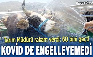 Doğu Anadolu'dan kurbanlık sevkiyatı Kovid-19'a rağmen arttı