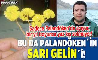 Bu da Palandöken'in Sarı Gelin'i!
