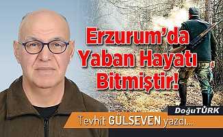 Erzurum'da Yaban Hayatı Bitmiştir!