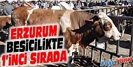 ERZURUM BESİCİLİKTE 1'İNCİ SIRADA