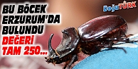 ERZURUM'DA 'GERGEDAN BÖCEĞİ' BULUNDU