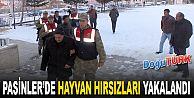 PASİNLER'DE JANDARMA HAYVAN HIRSIZLARINI YAKALADI