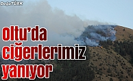 Erzurum'da orman yangını