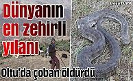 Oltu'da yılan korkusu