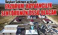 Sekmen: Erzurum, Türkiye'de hayvancılık sektörünün üssü olacak