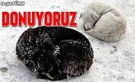 Doğu Anadolu buz kesti
