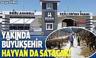 Yakında Büyükşehir hayvan da satacak!
